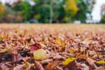 Fall's Carpet