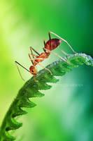 melancholy ant by karman87