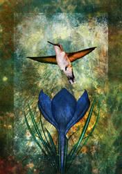 Hummingbird and Crocus