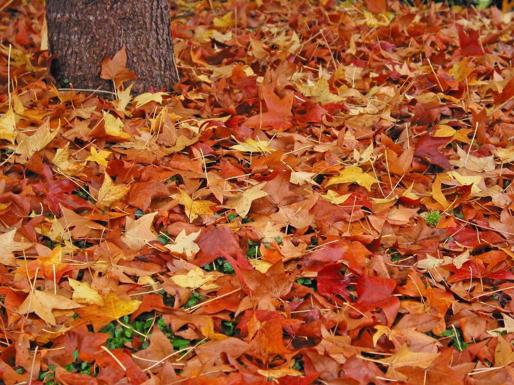 Fall by blonboy