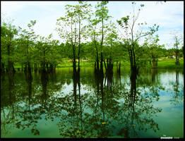 THE TREE OF LAKE