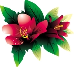 Tropical Flower HQ PNG
