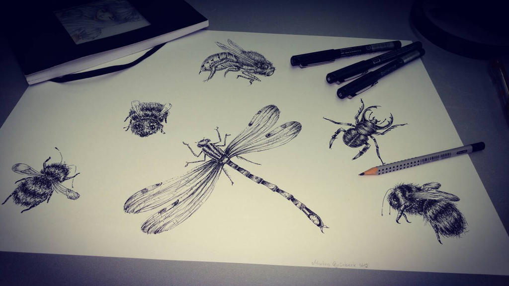 Insect Study by ZuukiGothzilla