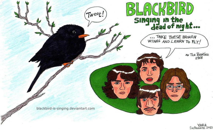 Blackbird-is-singing's Profile Picture