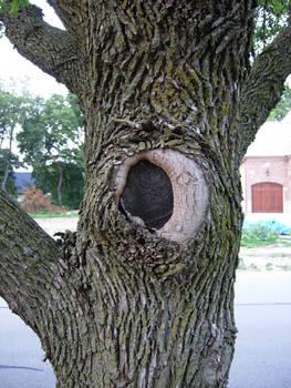 7 - tree