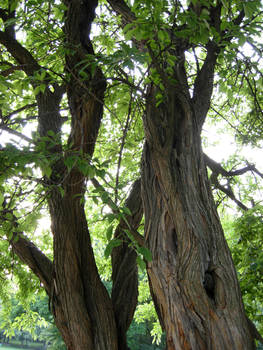 13 - tree
