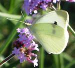 45 - butterfly