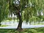 72 - tree
