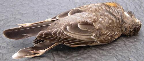 159 - dead bird