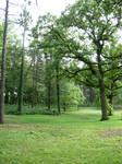 225 - tall trees