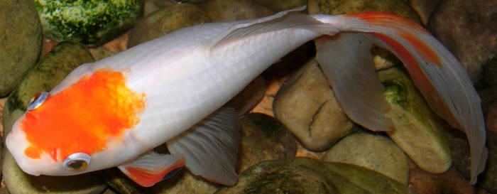 262 - fish