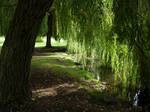 217 - under the willows
