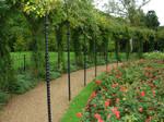259 - rose garden