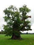 262 - tree
