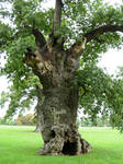 411 - tree