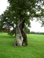 412 - tree by WolfC-Stock