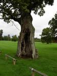 413 - tree