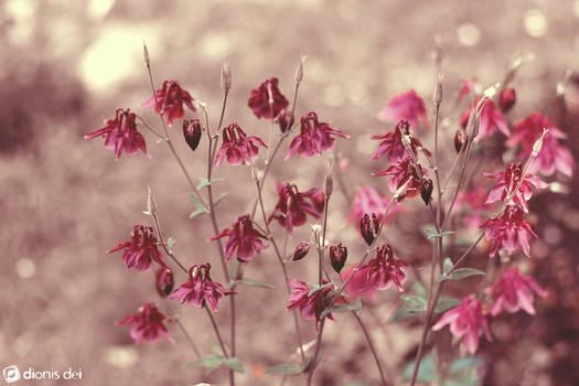 Flowers of Mars