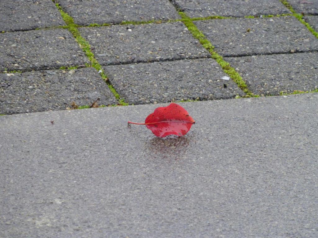 One Red leaf by Poorartman