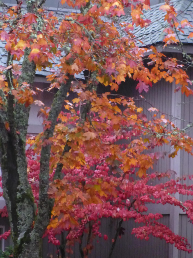 Autumn leafs 15 by Poorartman