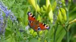 Butterflies on the Gellert Hill 3. by lilianadesign
