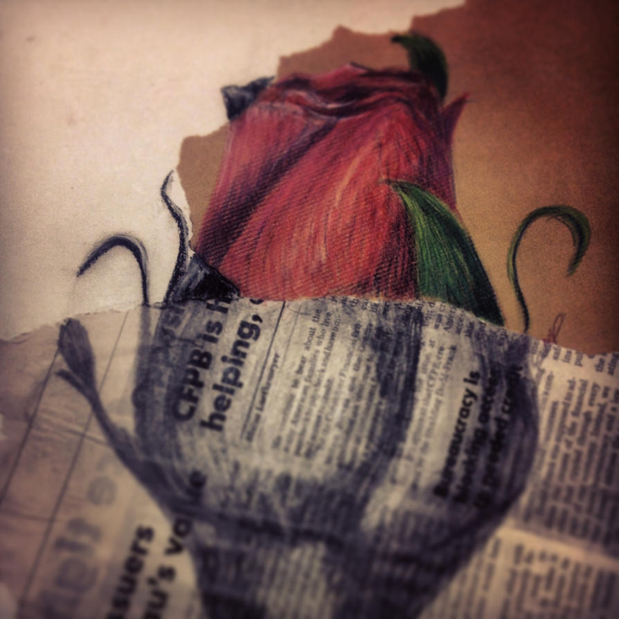 The rose by Night-Rader