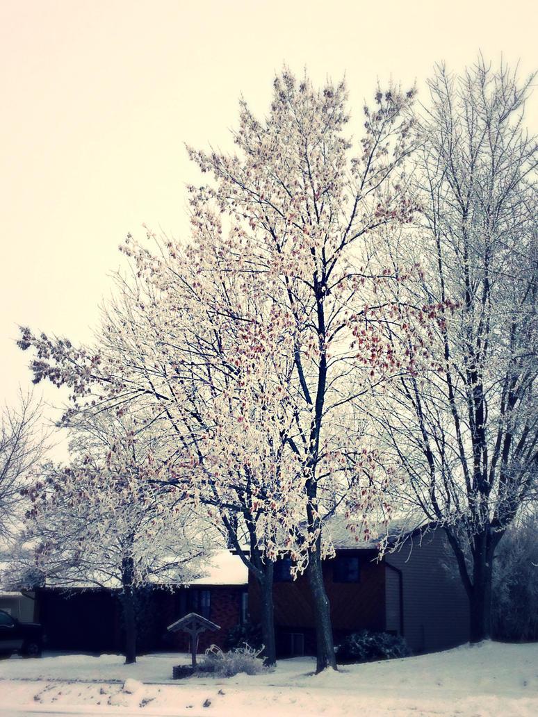 Snow by Night-Rader