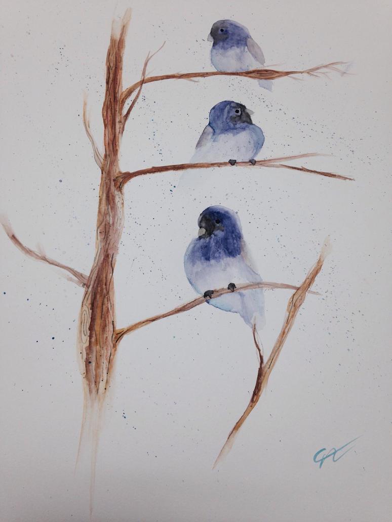 Blue birds by Night-Rader