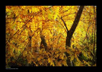 Yellow by asiantuntija