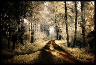 Silent path by asiantuntija