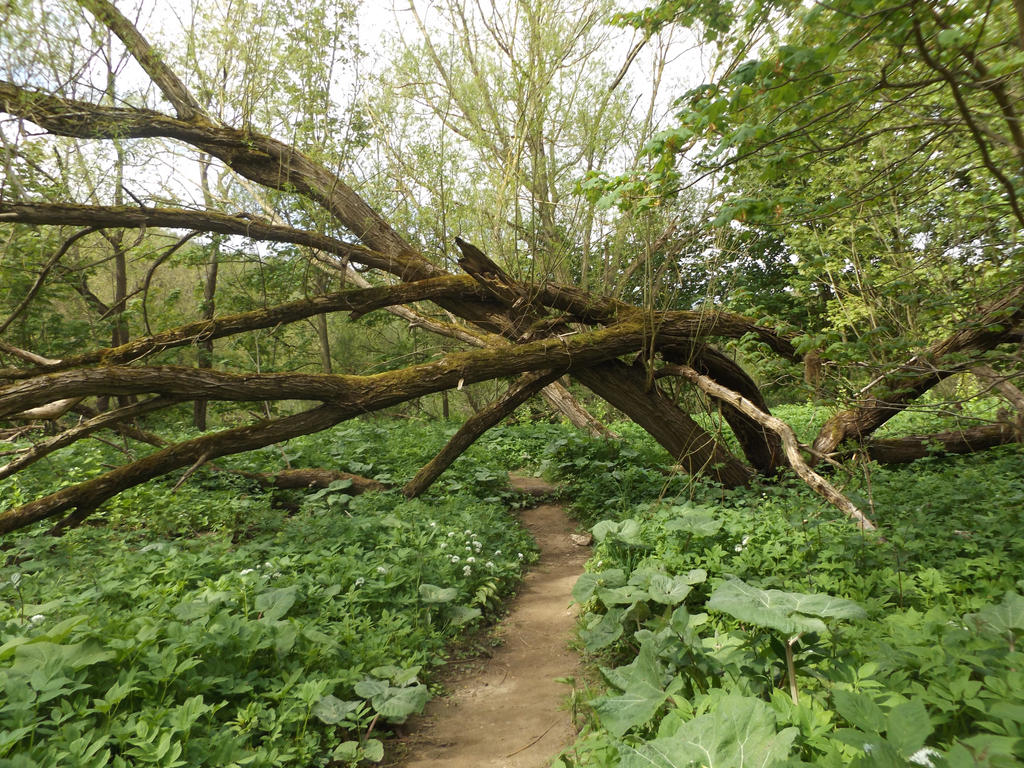 Stock: Nature's Archway by Fetterlock