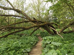 Stock: Nature's Archway