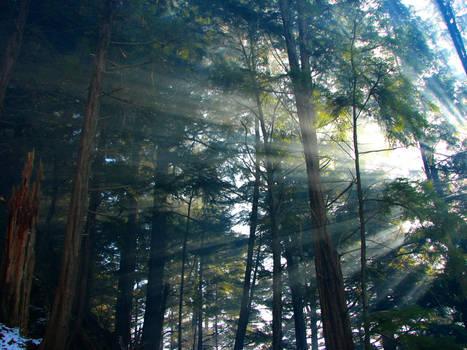 winter morning rays