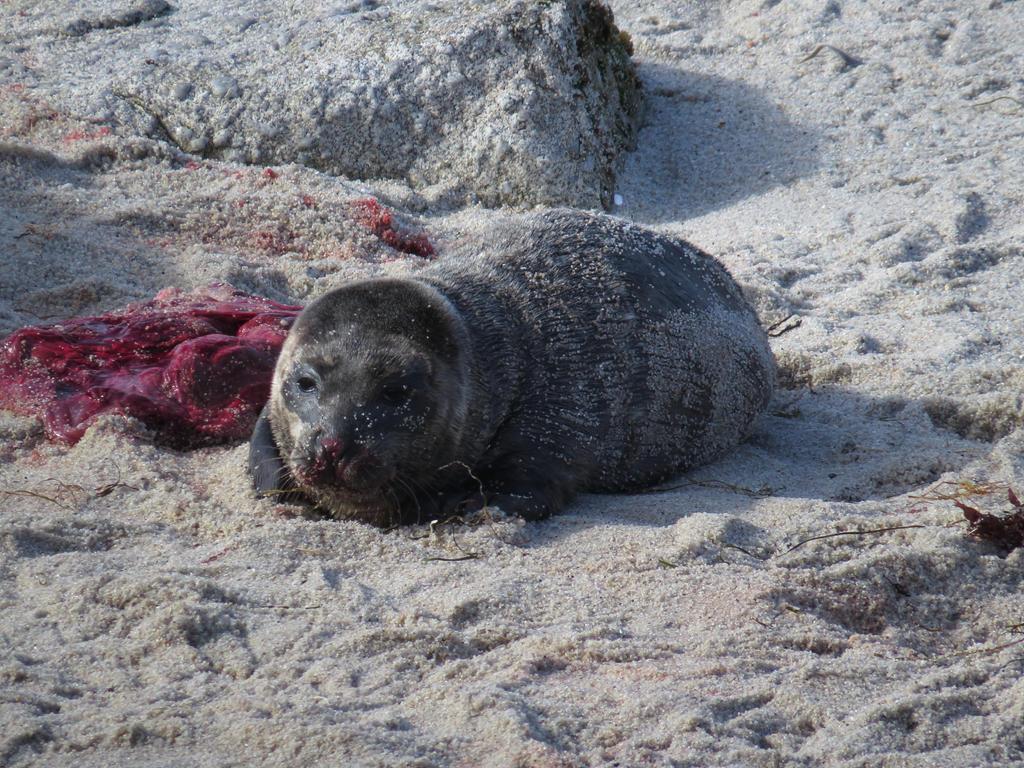 Newborn Harbor Seal | Wallpapers Gallery