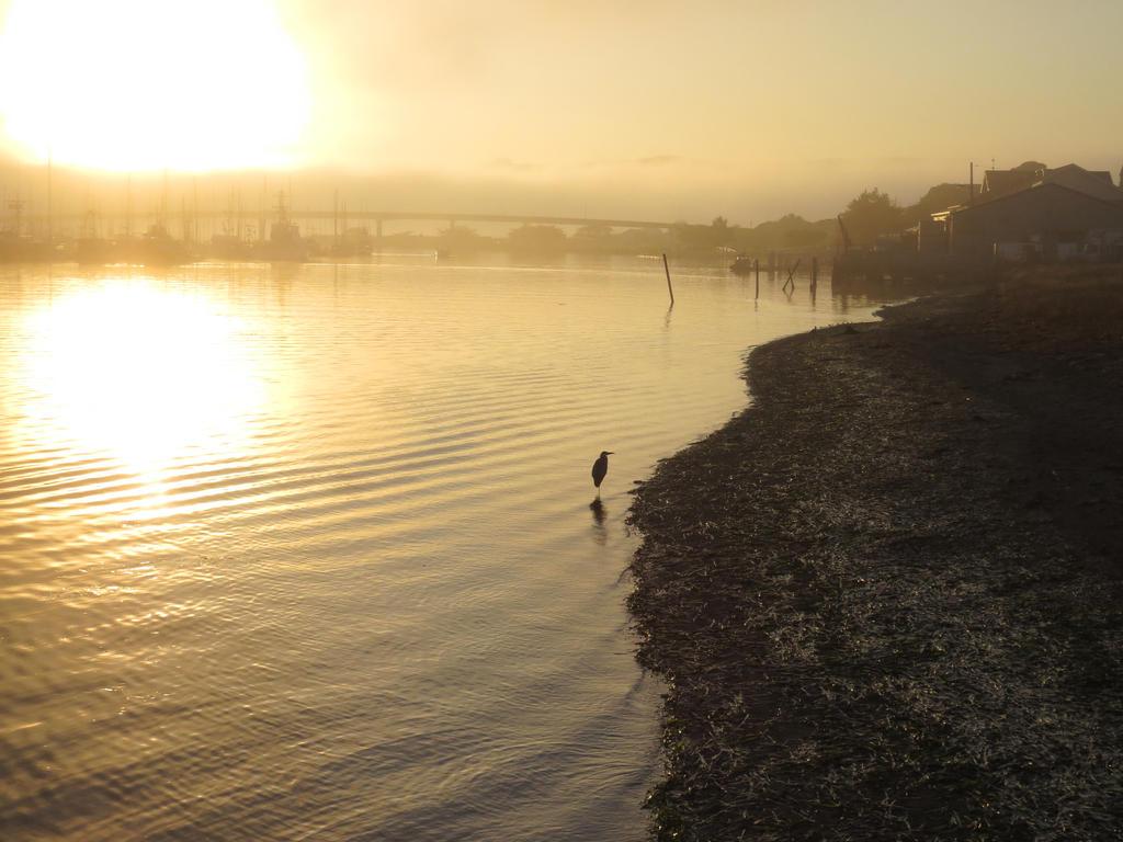 Heron In The Mist by Glacierman54