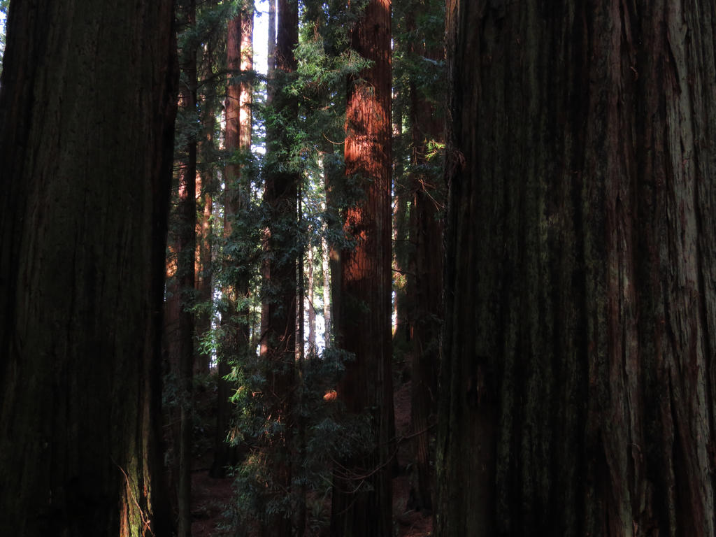 A Walk In The Redwoods 3 by Glacierman54