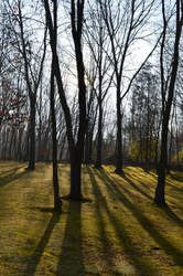 shadows by VerbumX