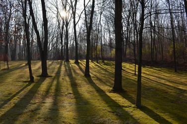 shadows 2 by VerbumX