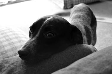 Toki Puppy by VerbumX
