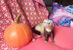 Gambit and pumpkin by Aya-Lunar