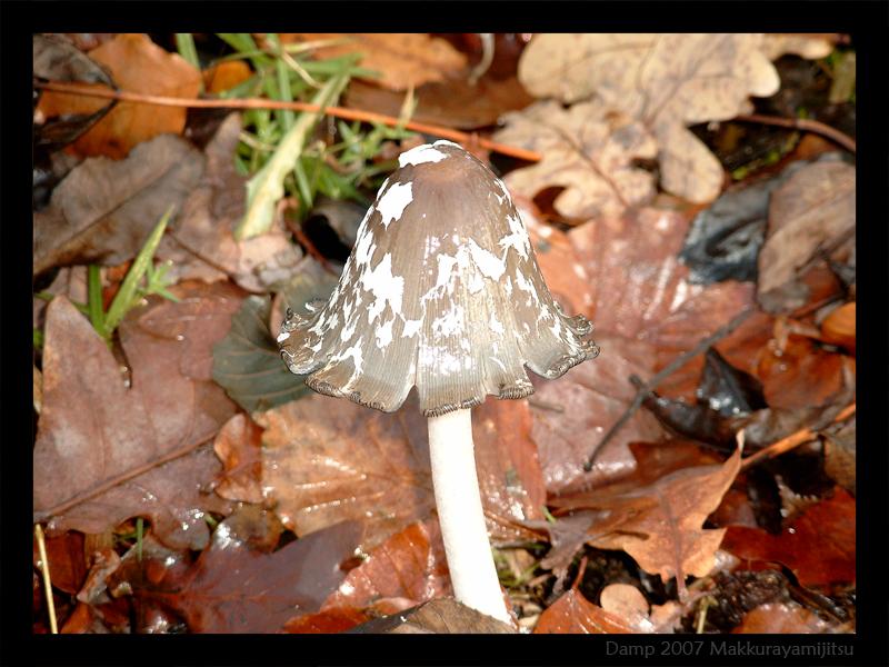 Mushroom by Makkurayamijitsu