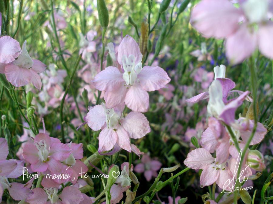 Bunny Flowers- Happy Mom's Day