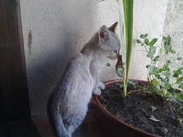 Nyaa que planta tan rica by yeneba