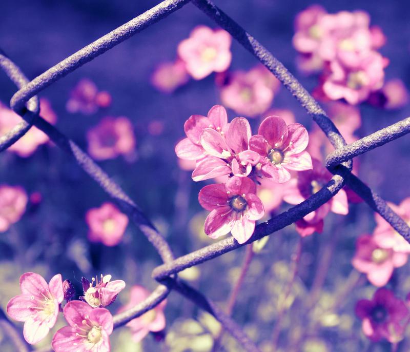 small garden flowers by Tiroko