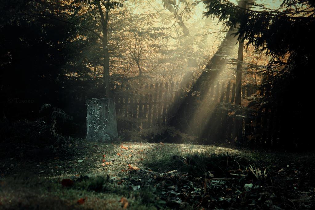 In morning I rest here by Tiroko