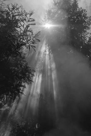 dym by Tiroko