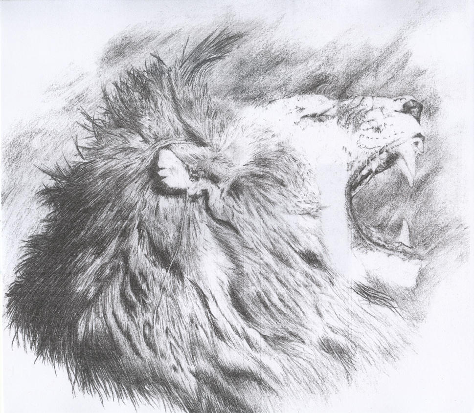 Roaring Lion by midnig... Lion Roaring Drawing