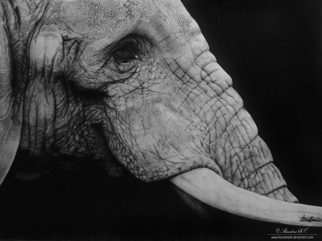 Elephant-watermark by Bansheeek