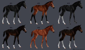 Lined KWPN foals // all gone // *point auction*