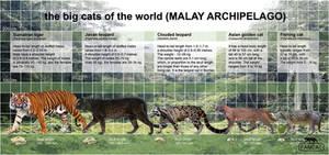 the big cats of the Malay Archipelago (fancat)